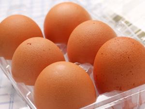 赤鶏の新鮮な卵